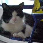 Get Rid of Ear Mites In Cats | Cat Health Behavior.com